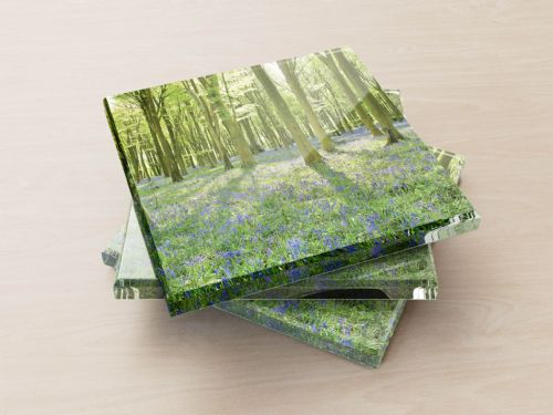Bluebell Forest - Glass Coasters